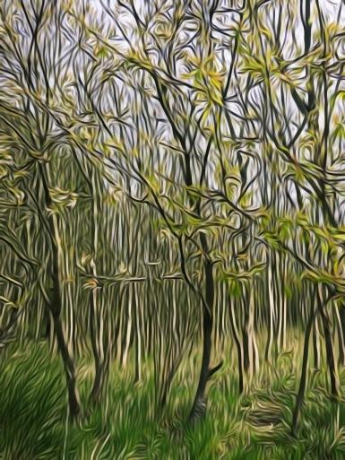 The Woods - A Little Magic