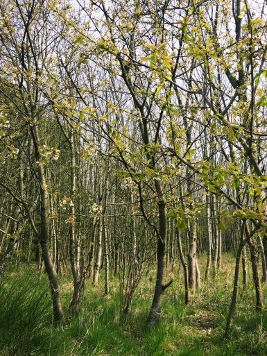 The Woods - Original